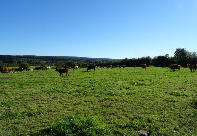 Fotoblog   Optimaal genieten in de Ardennen