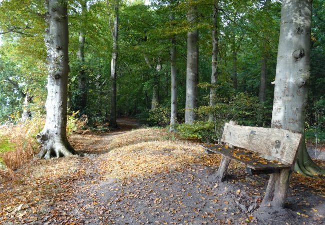 Herfst | Rondje rondom Landgoed Fraeyelemaborg