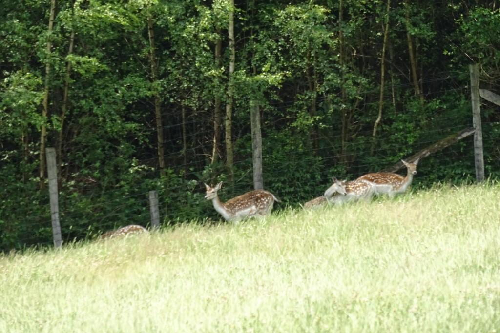 Le Parc à Gibier Ardennen