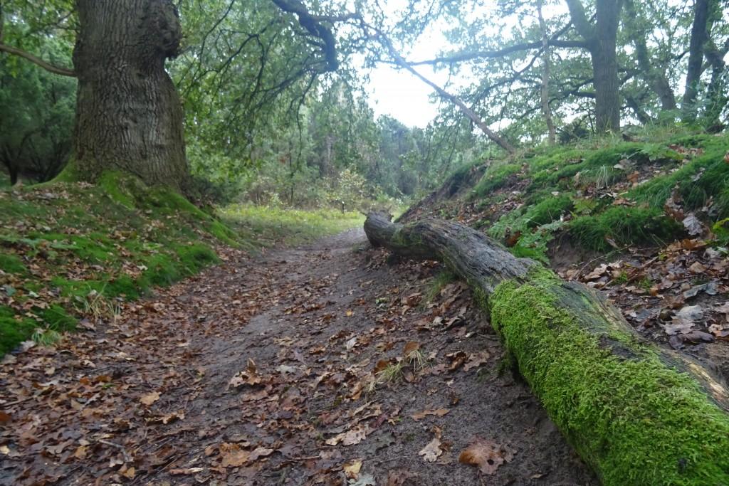 Jeneverbesroute Mantingerveld wandelen herfst