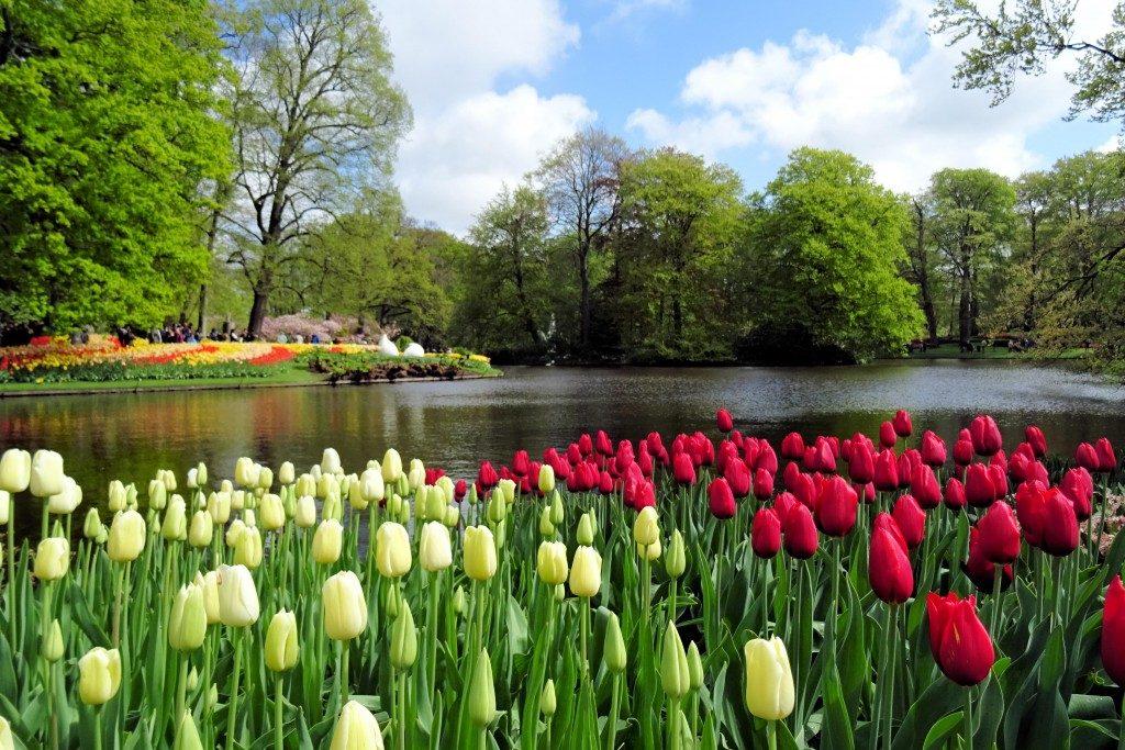 Keukenhof Lisse Nederland tulpen